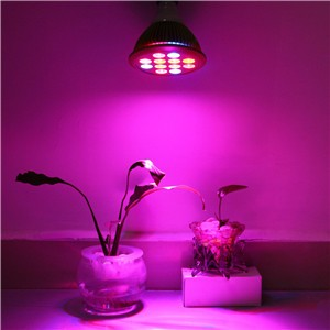 E27 12W LED Grow Light Bulb 12 LEDs Hydroponic Plant Growing Lights Red & Blue for Garden Greenhouse